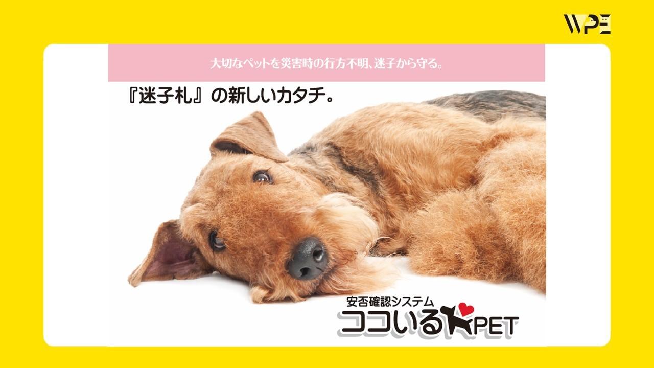 『ココいるペット』~画期的な迷子札の新しいカタチ〜