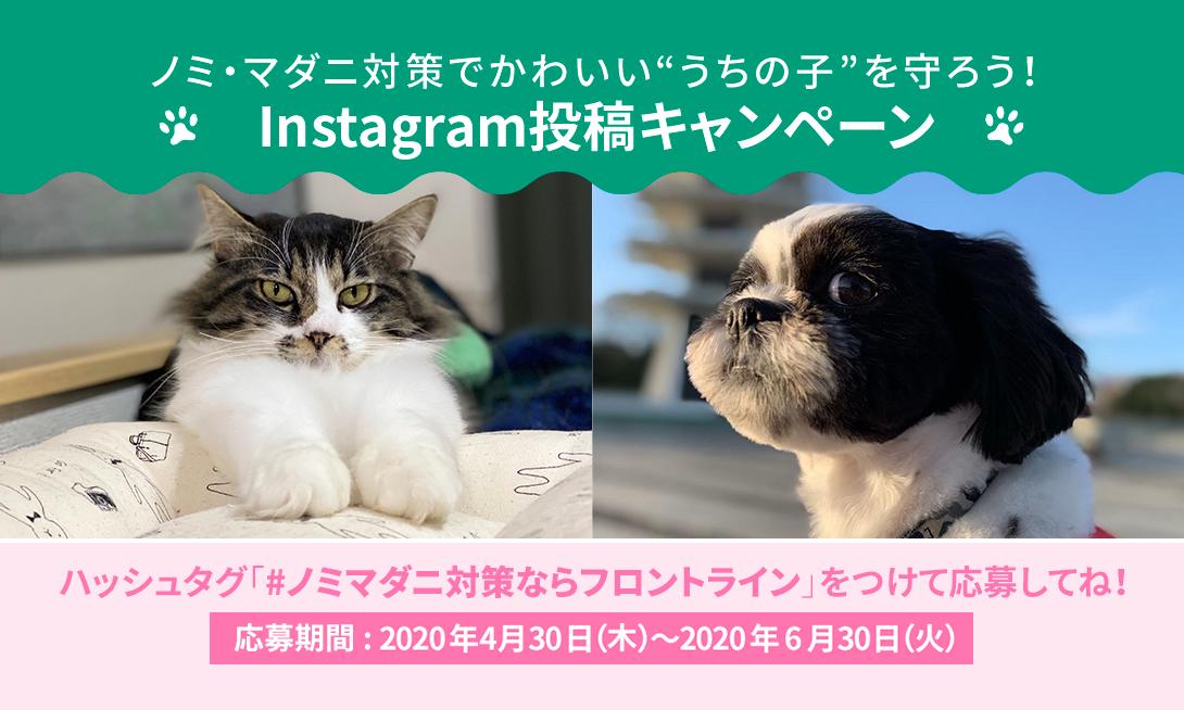 ノミ・マダニ対策でうちのコを守ろう!Instagram投稿キャンペーン!