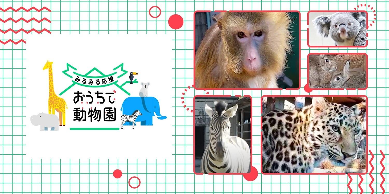 みるみる応援 おうちで動物園(神戸どうぶつ王国 編)