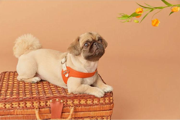 【旅のおすすめアイテム③】旅はおしゃれも楽しみたい「イタリア本革 犬用ハーネス」