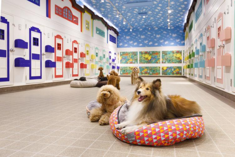 """【神奈川/横浜】泊まってよかった!愛犬も飼い主も笑顔になれるペットホテル""""WANCOTT"""""""