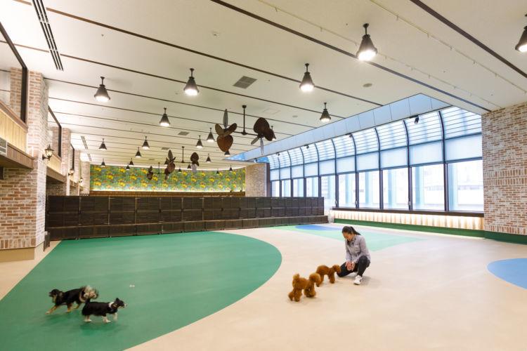 広さ約600平米、国内最大級の屋内ドッグランでのプレイタイムは、ドッグトレーナーも一緒に思い切り遊ぶ