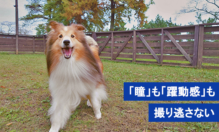 【ペット撮影】動くペットの可愛い「瞳」も「躍動感」も撮り逃さない!