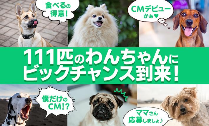 まさかうちの子が!?  111匹のわんちゃんにCMデビューのチャンス到来!!