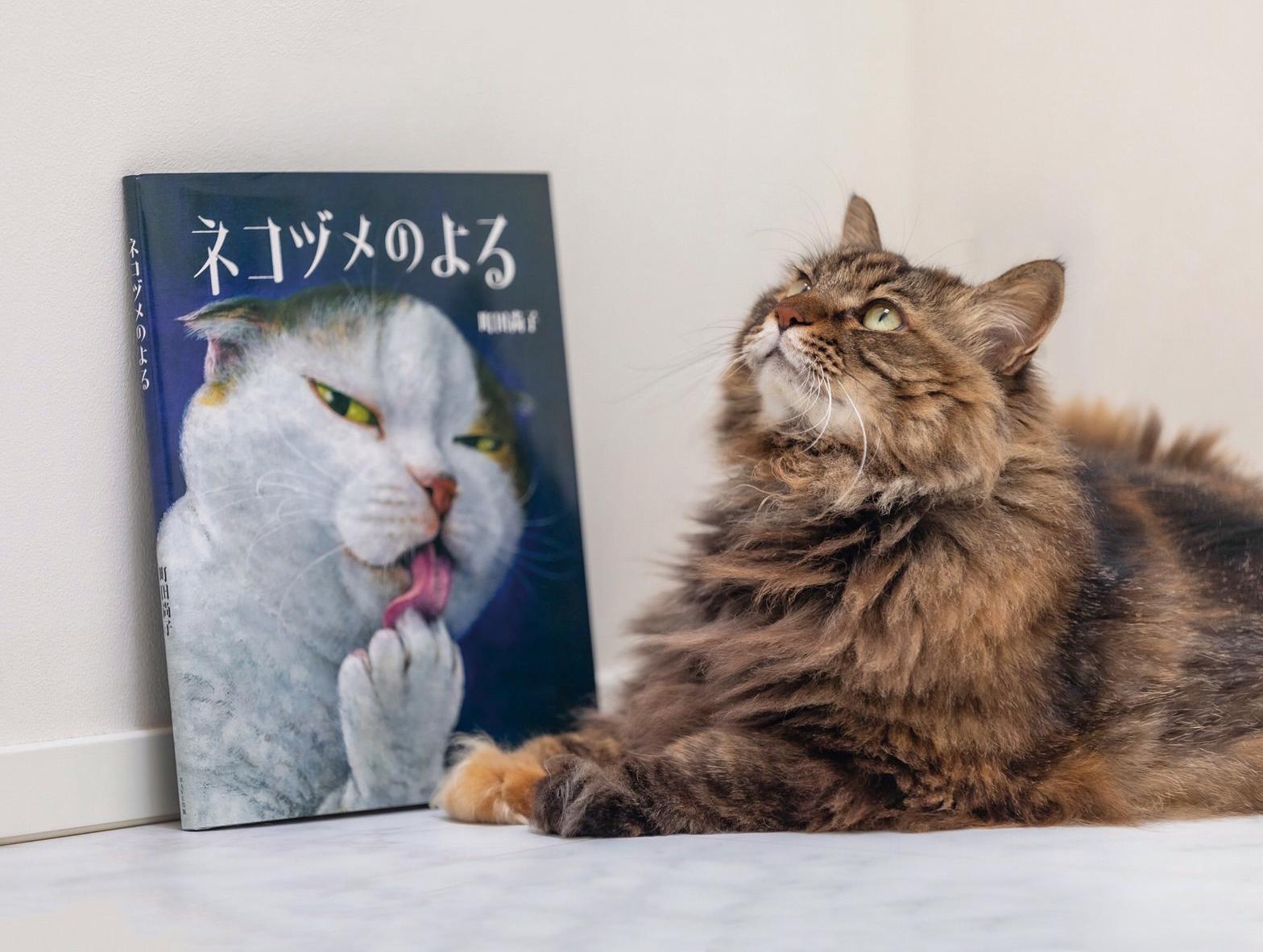 江田さんの愛猫「テンちゃん」(10歳♀)