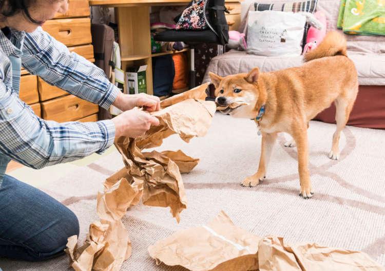 柴犬、今日もまたいらぬお手伝いをするの巻(虎鉄のお手伝い絵巻編)