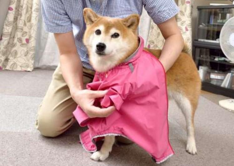 日本犬アーカイブ 犬にかける時間や手間(ひと手間かけることが飼い主の喜びでもあるわけで編)