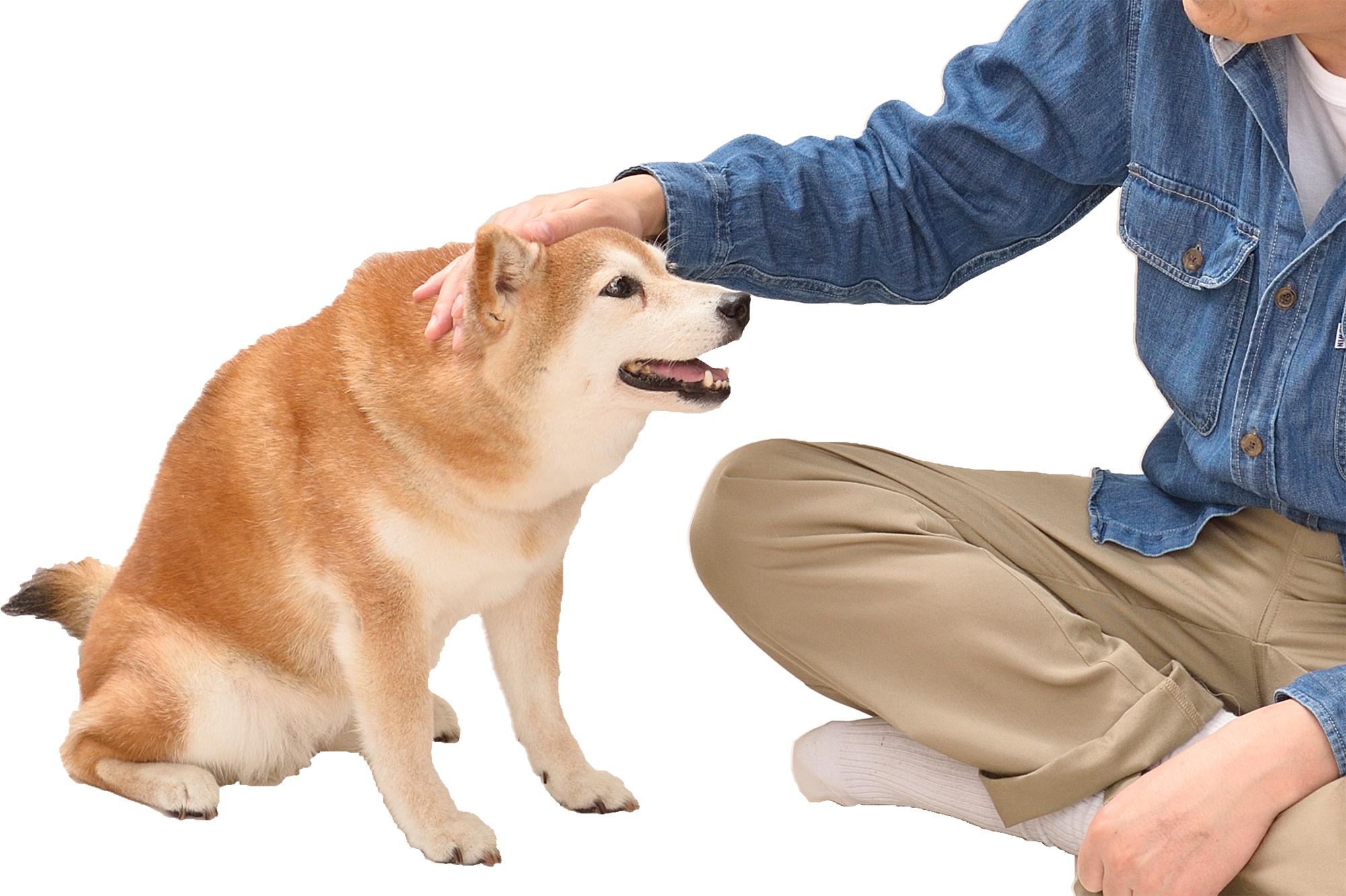 【日本犬に多い意外な病気】胆嚢のトラブル