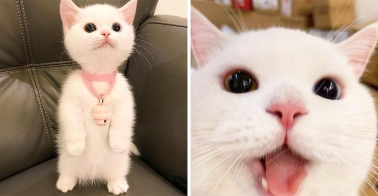 「私、可愛いすぎるで賞をいただきまちた」天真爛漫な白猫ちゃん。天使過ぎるその姿に注目ッ!!