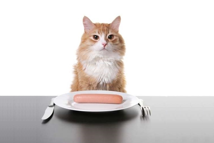【獣医師監修】猫に魚肉ソーセージを与えてはいけない理由