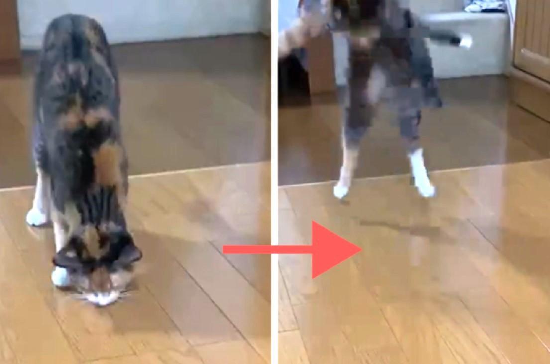 """ネコが飛び上がるほど驚いた、床に落ちた""""アレ""""とは。去り際の動きも必見です…(*´∀`)笑"""