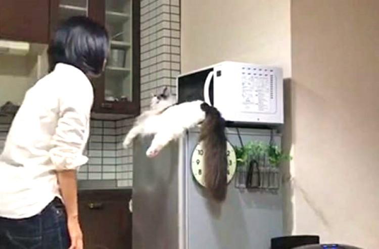 『毎朝の儀式』のため愛猫に近づくママ → 次の瞬間、うらやましすぎる光景が飛びこんでくる(*´Д`)