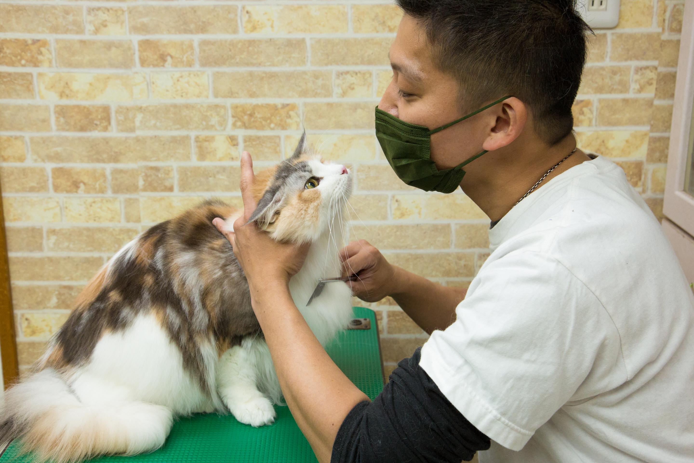 【ベテラントリマーが教える】猫ちゃんにつくノミの見つけ方、駆除方法