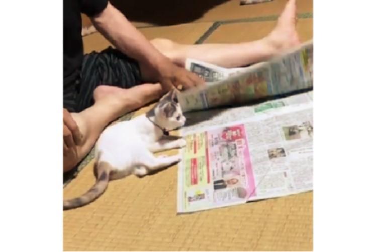 新聞の中に隠れだす子ネコ。めくる手を妨害する姿が可愛すぎて、集中して読めない(´艸`*)♡