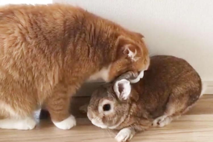 ウサギ流の挨拶を覚えたはずのニャンコ。でも、ウサギさんへの気持ちを抑えきれず…次の瞬間(゚Д゚)!