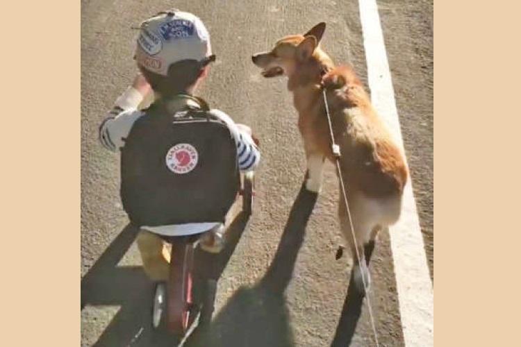 弟くんをチラチラと見ながら歩幅を合わせる兄ワンコ。仲良く並ぶ背中とお尻に、癒やされる〜♡ (29秒)