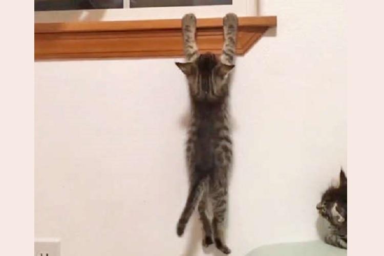 「ぜったい登るニャ」手足に力をこめて、高い場所へ行こうとする子猫! 一生懸命な姿に応援したくなる♪