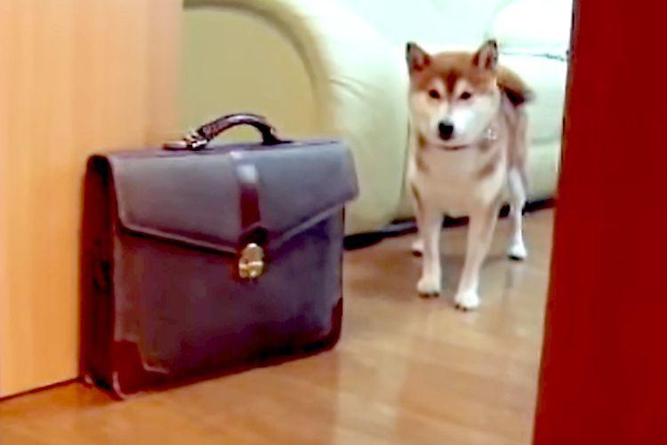 【お散歩ボイコット計画】飼い主さんにお散歩を誘われるワンコ → 行かない理由を語りだす…(笑)