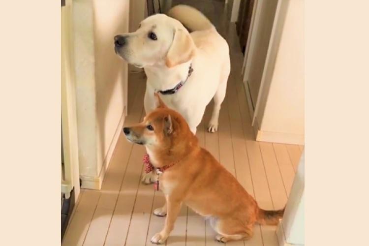 『見守り隊』として、キッチンにあつ~い視線を送るワンコたち♪ その息ピッタリな仕草が可愛すぎて…♡