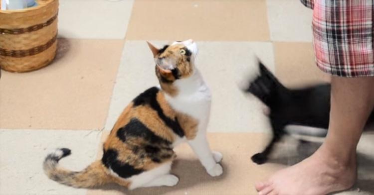 抱っこをおねだりする猫に『黒い影』が襲いかかる!? → この後、まさかの展開に…♡