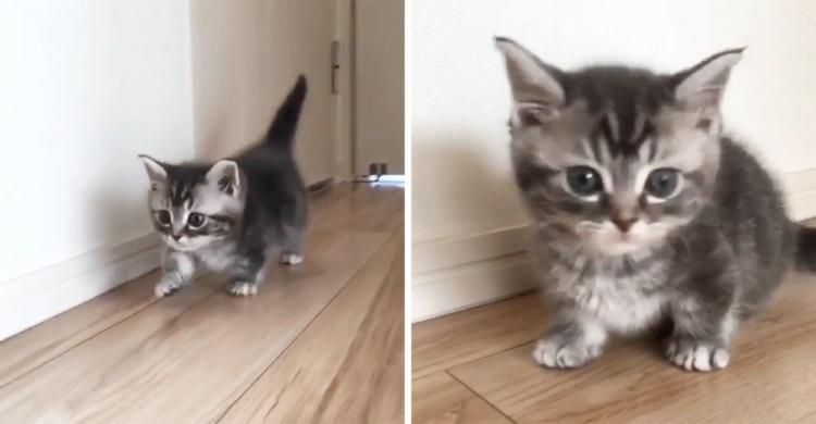 子ネコの動きは予測不能!? 近寄ってきたり、よちよちダッシュしたり…。やんちゃな姿が愛おしいッ♡
