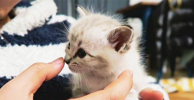 【欲しがり子猫♡】ミルクがなくなっても両手をバタバタ。哺乳瓶を求める動きが可愛すぎた(*ノωノ)