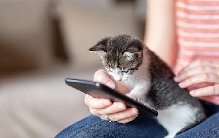 愛猫のフード選びは便利に賢く!楽しく買い物できるau PAY マーケットがオススメ