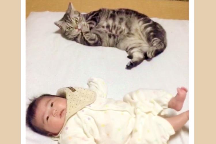 【つられちゃった♡】子守に挑戦するニャンコ。しかし、ゴロゴロする赤ちゃんを見ていたら…♡