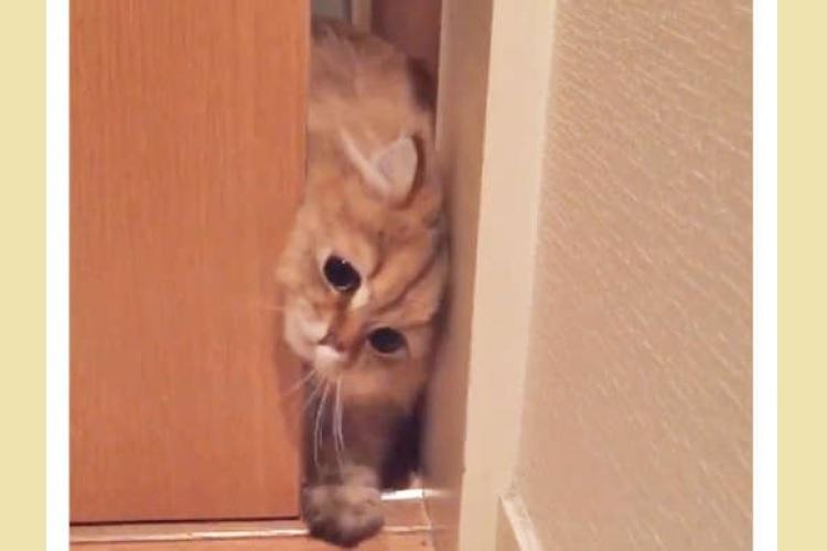 ど〜してもお部屋に入りたいニャンコ。顔を横にしたり手を伸ばしたりして、扉と戦う様子が…(*´ω`)