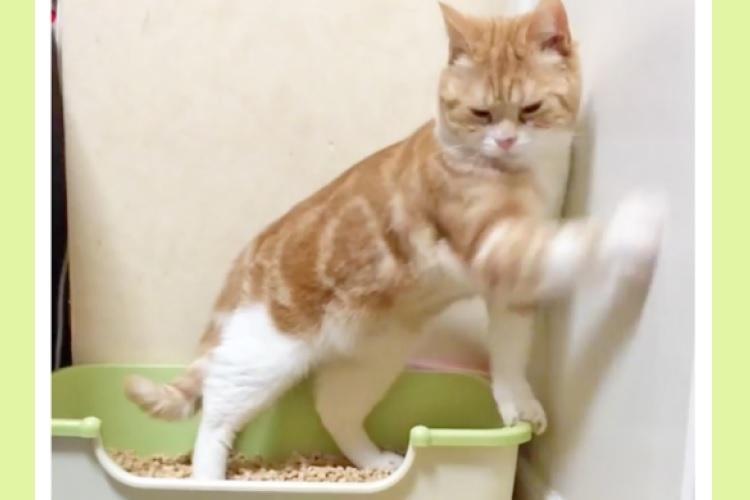 【そっちじゃな〜い!】トイレを済ませたネコさん→砂をカキカキすると思いきや… まさかの展開に(笑)
