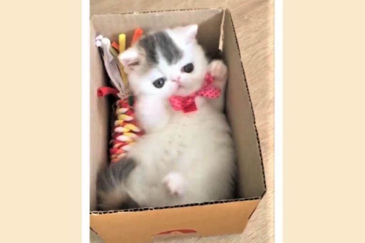 見つけた箱に、ピッタリ収まろうと試行錯誤する猫。→ 最後に見せた『満足げな表情』がかわいかった♡
