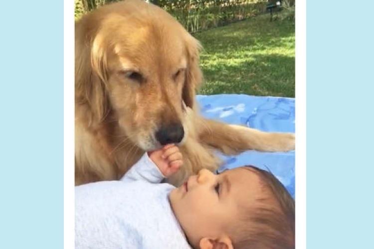 【もふもふベビーシッター】赤ちゃんを優しく見守るワンコ。まるで母親のような眼差しに心が温まる。