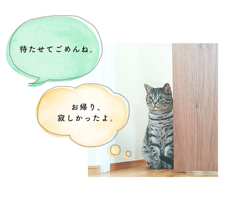 猫ちゃんは、室内飼いをしているから安心?  待たせてごめんね。 お帰り、寂しかったよ。