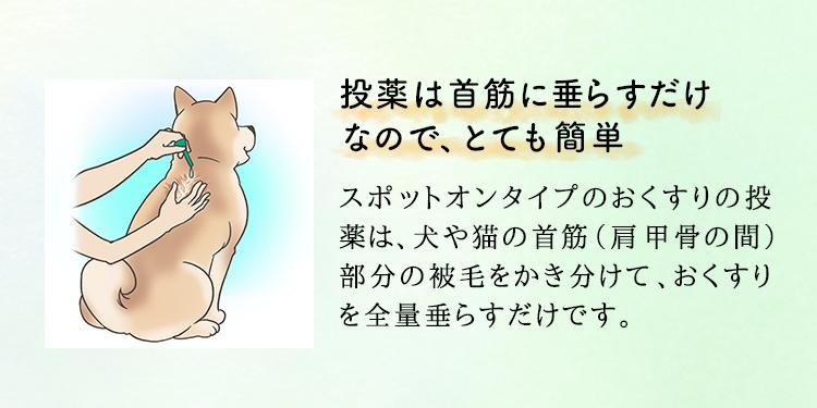 投薬は首筋に垂らすだけなので、とても簡単 スポットオンタイプのおくすりの投薬は、 犬や猫の首筋(肩甲骨の間)部分の被毛をかき分けて、 おくすりを全量垂らすだけです。