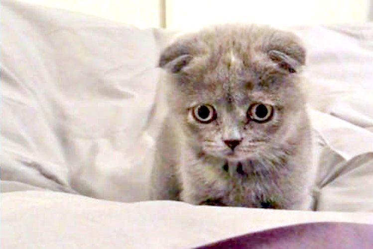 布団の下でモコモコうごく「敵」を発見! ぴょんぴょん飛び跳ねて戦う、らぶり〜な子猫ちゃん(*>ω<)