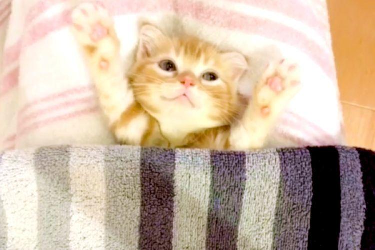 子猫のお腹に布団をかけた →『ポカポカだにゃ〜♡』幸せそうな反応を見せてくれた♡(13秒)