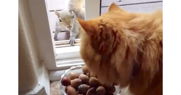 【ドングリの誘惑♡】猫の前にあるドングリが欲しいリスさんのとった、大胆な行動とは…(*´ω`*)?