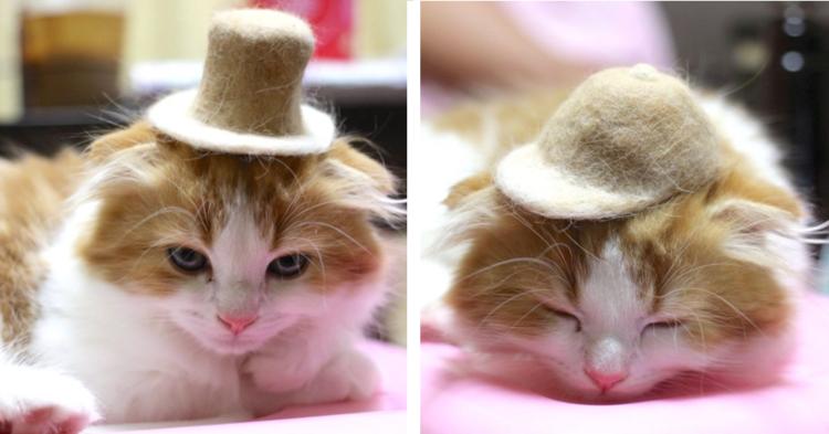 【猫毛の帽子♪】出会ったときから集め続けた愛猫の抜け毛で、帽子を作ったところ…(*´艸`*) 11枚