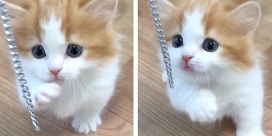 【これは何かニャ?】揺れるユラユラが不思議でたまらない子猫。ツンツンしてみたら…(*´艸`*)♡