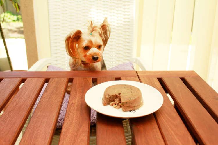 きわだつ大きさ!中からゴロッ!まるでお肉のケーキ! グレインフリーの 贅沢フードに愛犬が夢中と話題!