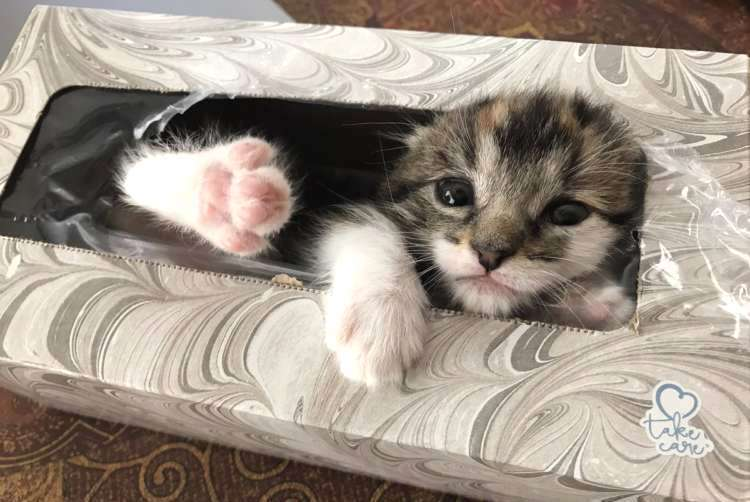 【ここにいるニャ…♡】子猫の姿が見えなくなった→ とんでもなく可愛い姿で発見される(*´Д`) 3枚