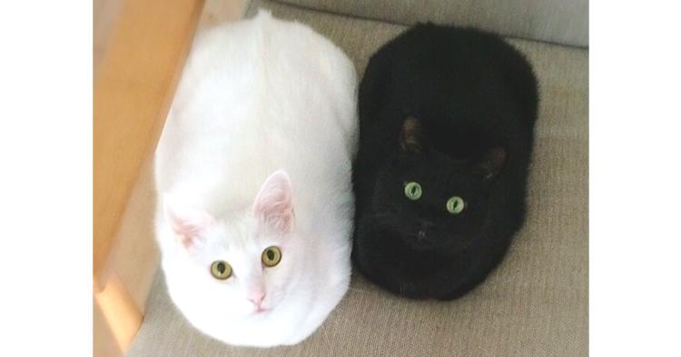 一緒にいるだけで絵になる、2匹のニャンコたち!「白黒な日常」にキュンとする10枚