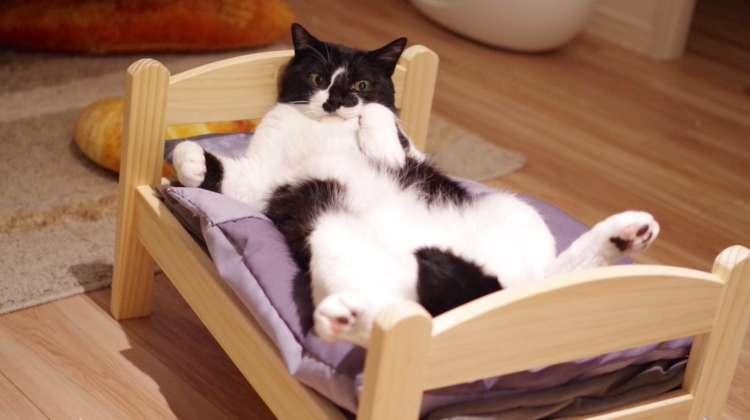 愛猫のために『ベッド』を買ってあげた結果 →  まるで人間のように使いこなす姿が…(゚д゚)! 5枚