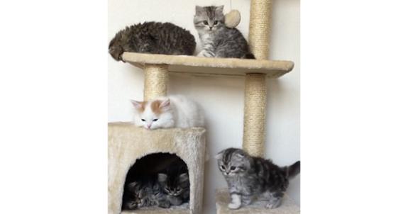 6匹の子猫兄妹が大集合した「個性豊かなキャットタワー」がかわいすぎて… ずっと見ていたい♡