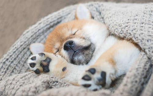 ながら 鳴く 寝 犬
