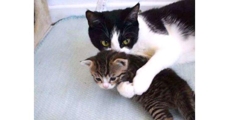 子猫煩悩なお母さん♡ 子猫のことが大好きすぎて、「嗅ぐ・吸う・舐める」の3コンボ(〃∇〃)