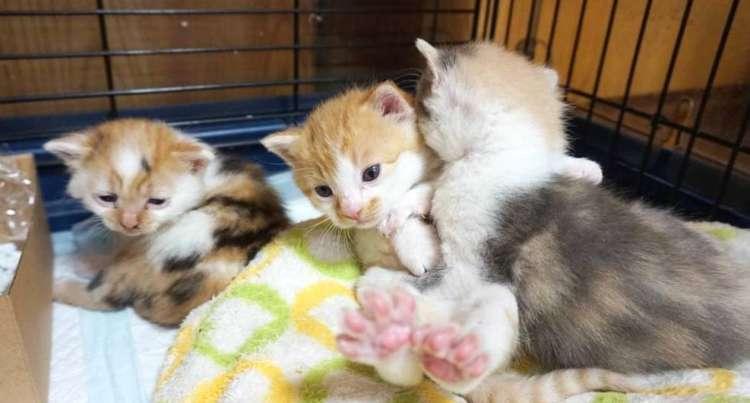 物置きで発見された生後間もない3匹の子猫。飼い主さんが、母猫の代わりを引き受けたら…