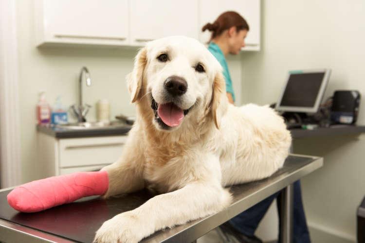 犬をペット保険に加入させる際の注意点は?