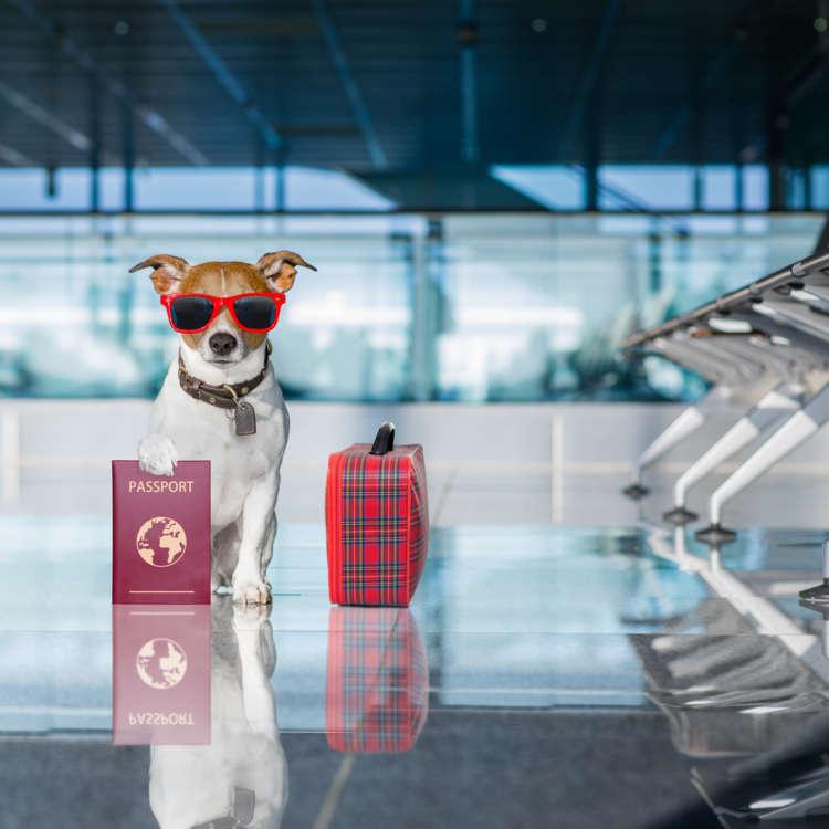 犬を飛行機に乗せる!申し込み方や注意点は?