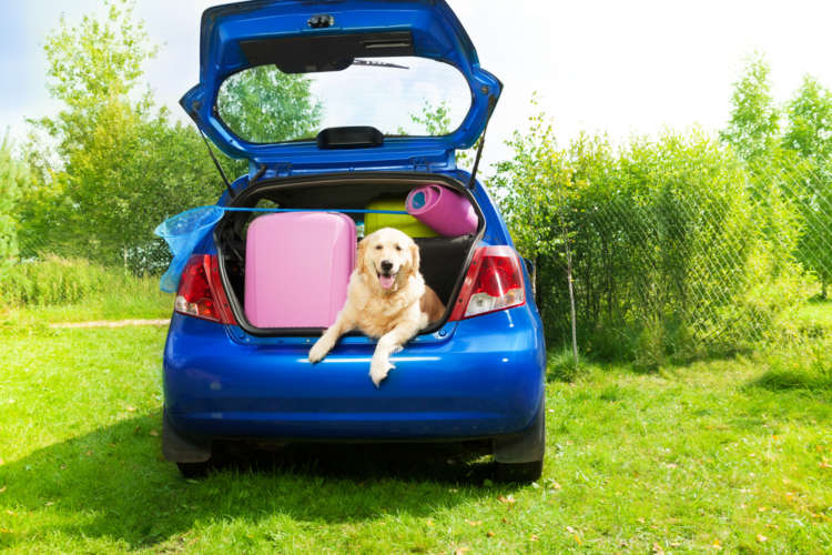 犬と一緒に旅行に行こう! 注意点は?
